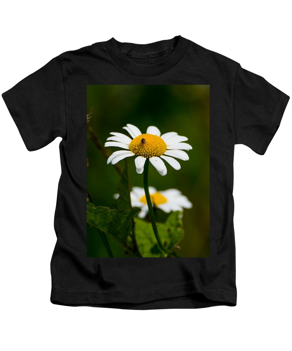 Daisy Kids T-Shirt featuring the photograph Daisy by Jan M Holden
