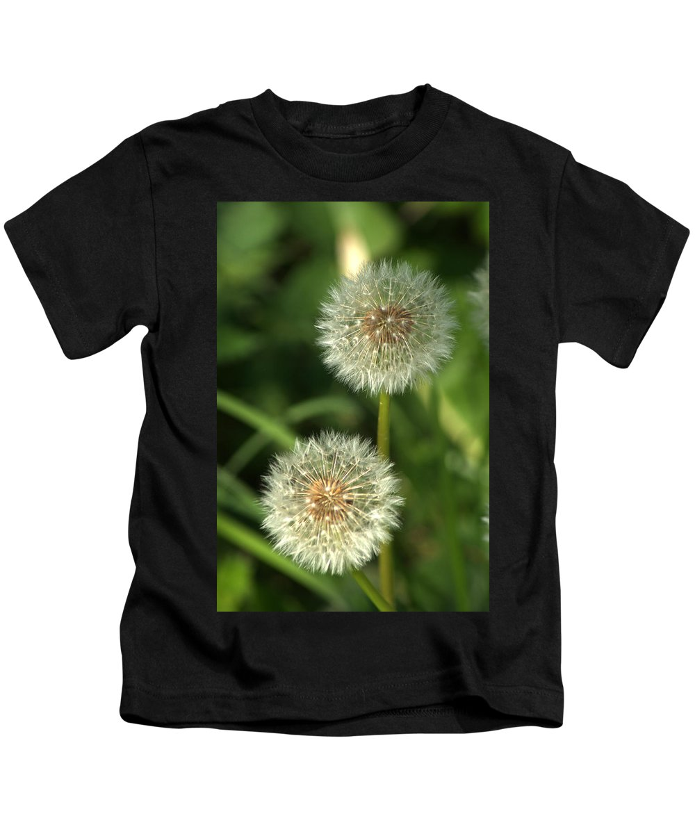 Dandelion Kids T-Shirt featuring the photograph Dandelion Seed Heads by Chris Day