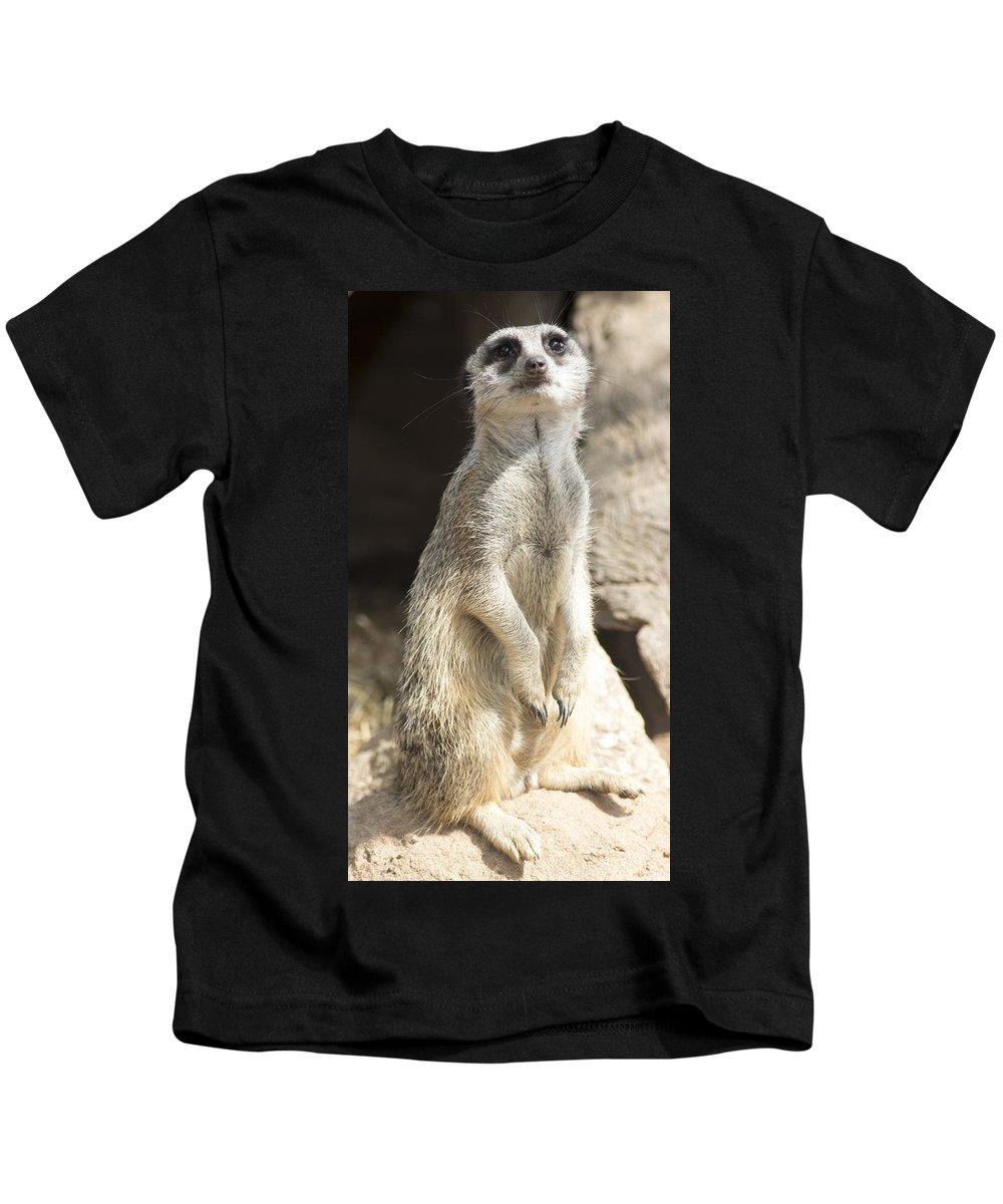 Animal Kids T-Shirt featuring the photograph Deligence by Masami Iida
