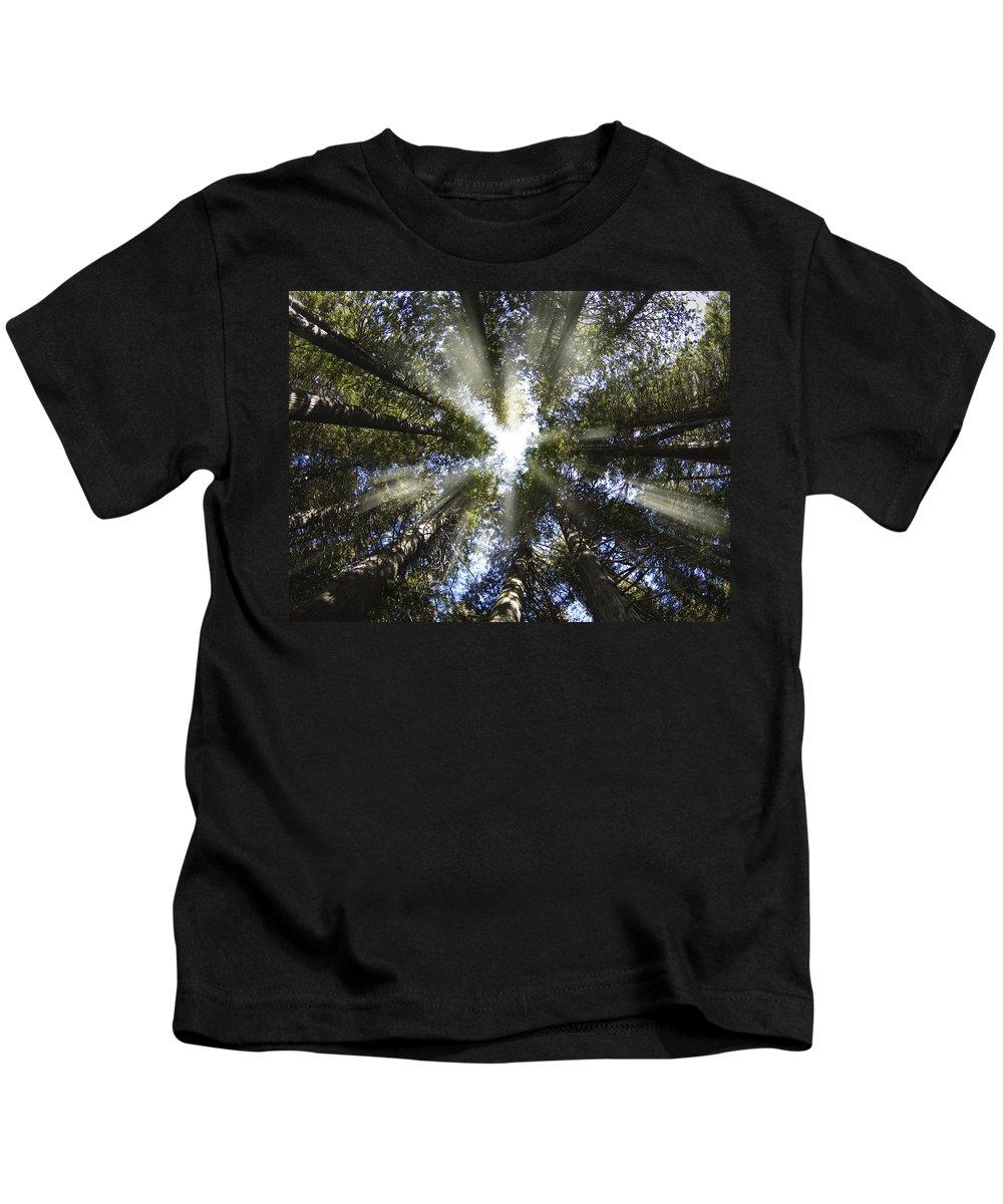 Devoto Grove Kids T-Shirt featuring the photograph Devoto Grove by Leland D Howard