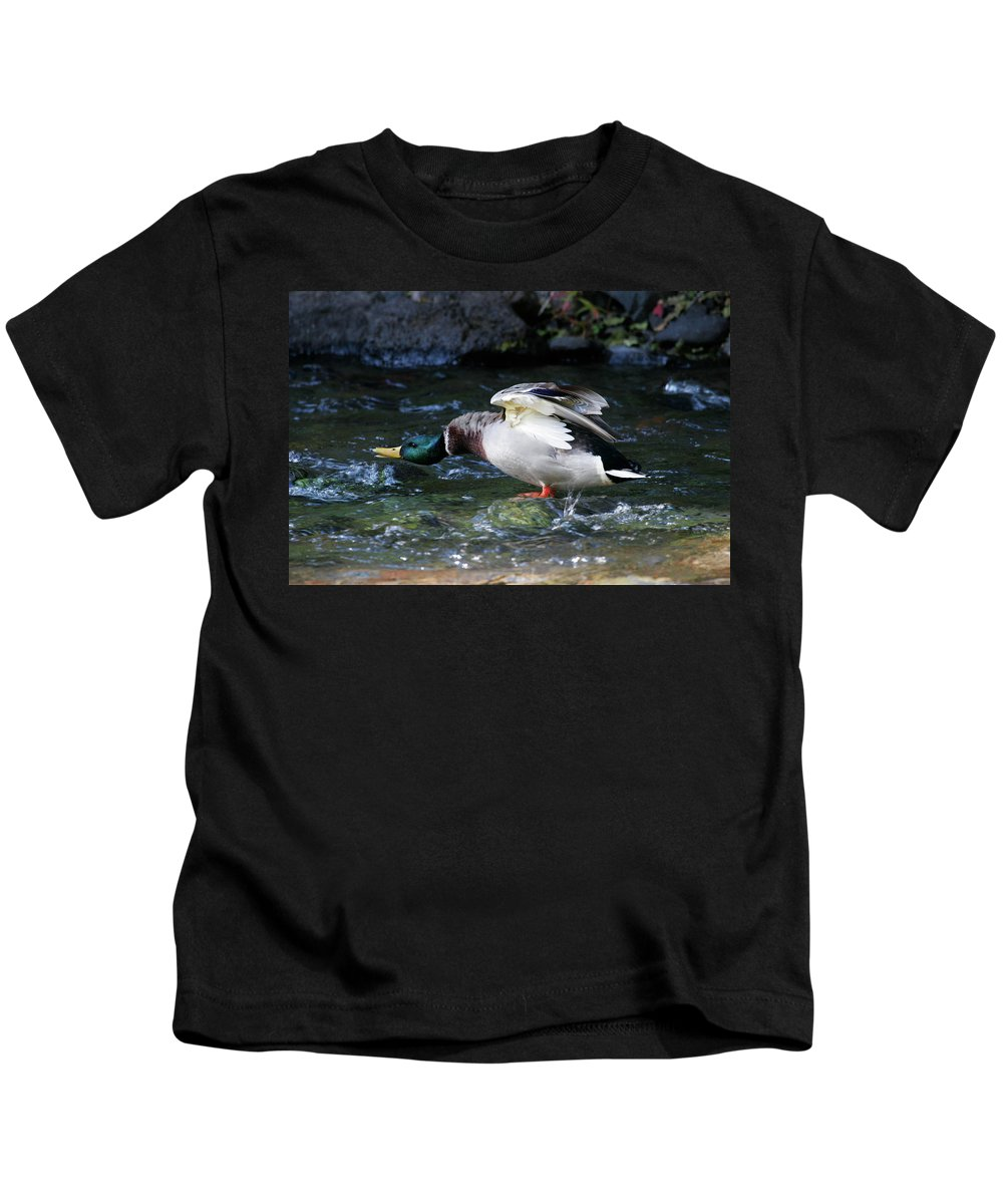 Mallard Drake Kids T-Shirt featuring the photograph Don't Mess With Me by Randall Ingalls