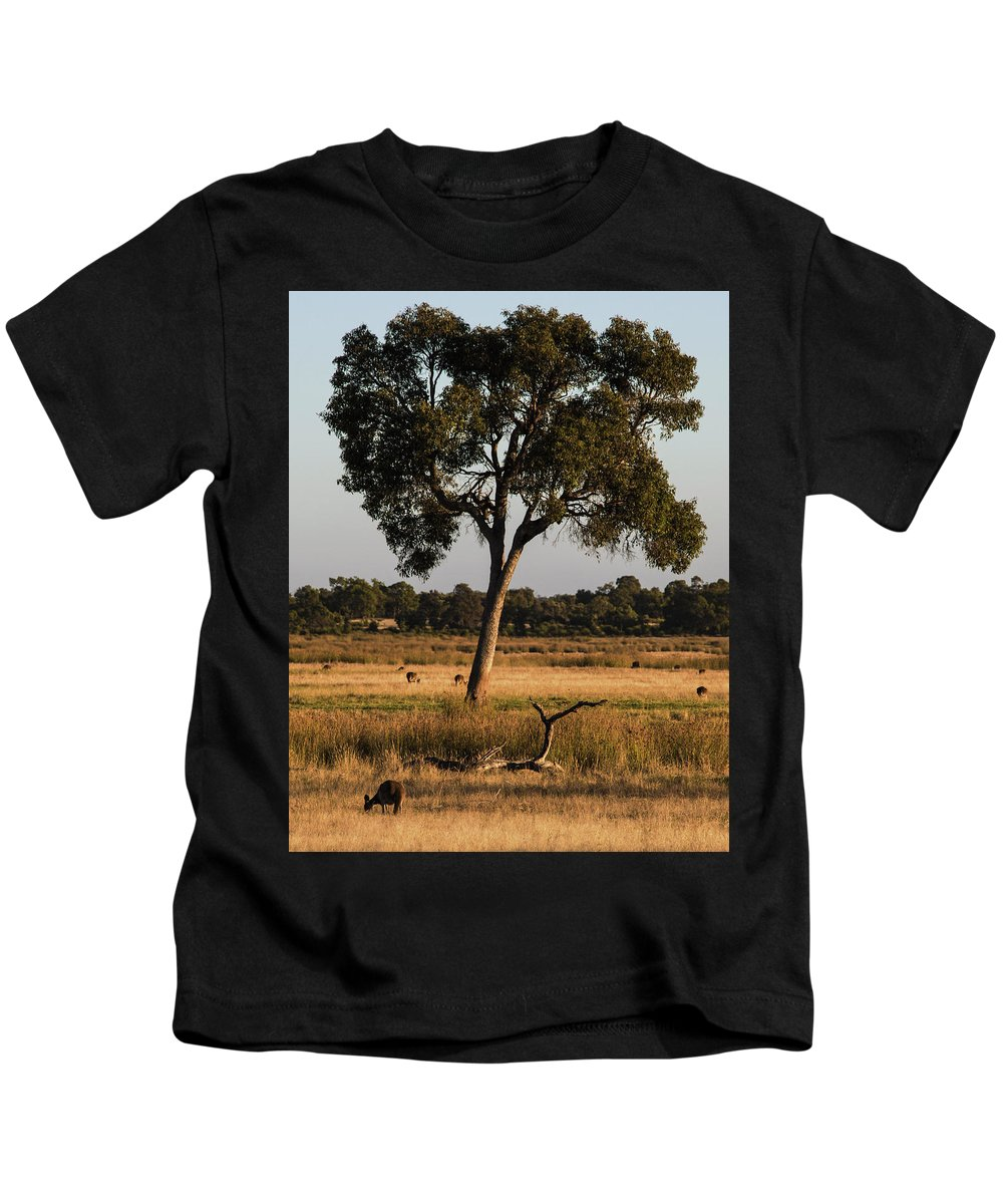 Kangaroos Kids T-Shirt featuring the photograph Early Morning Feed by Tania Read
