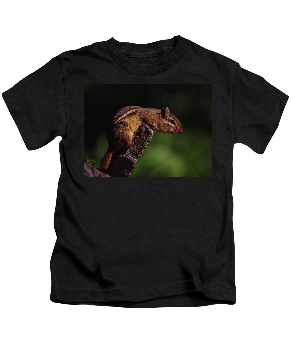 Native Kids T-Shirt featuring the photograph Eastern Chipmunk On Stump by Mark Wallner