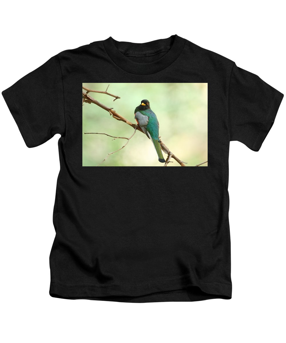 Birds Kids T-Shirt featuring the photograph Elegant Trogon At Chiricahuas' South Fork by Steve Wolfe