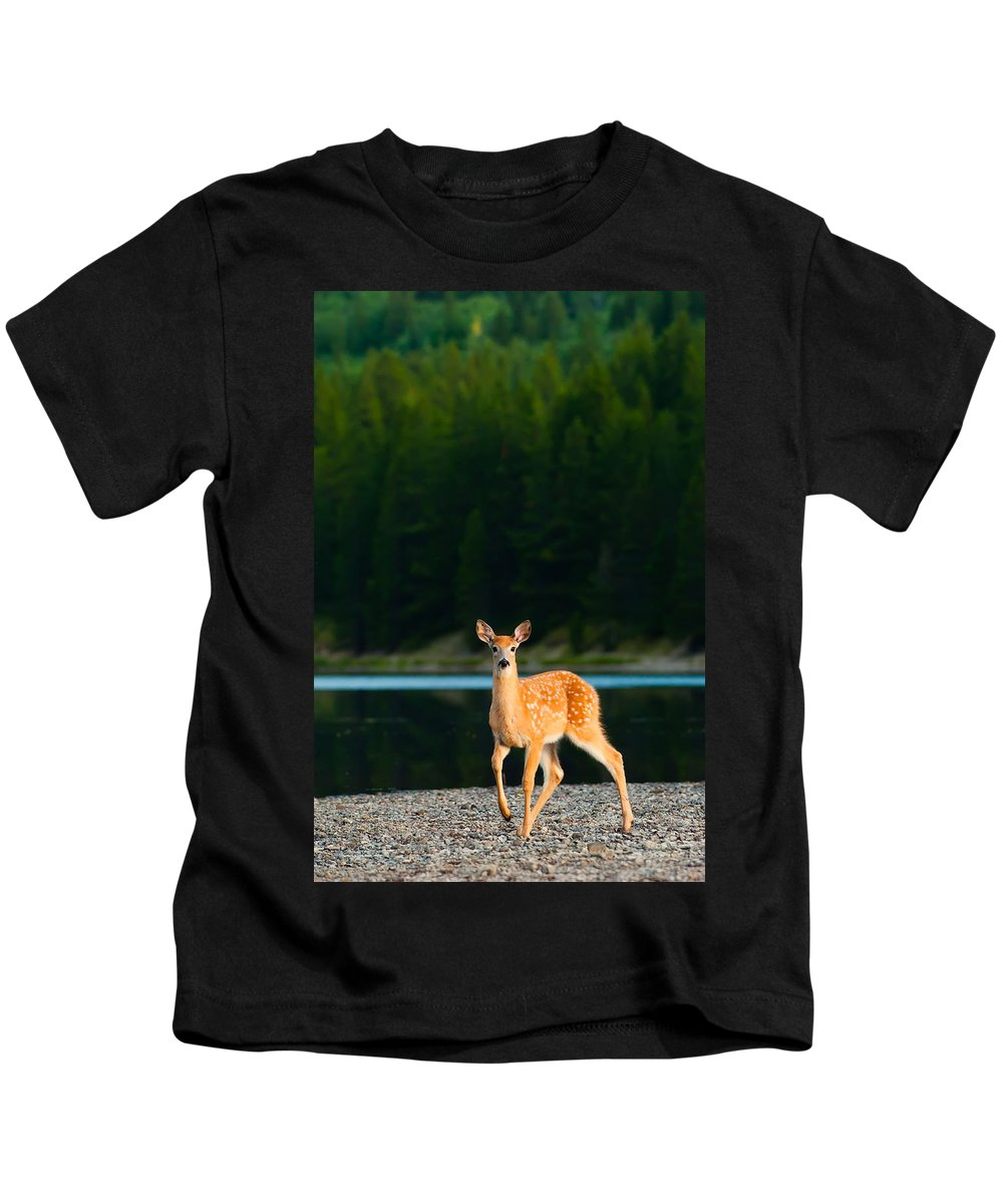 2006 Kids T-Shirt featuring the photograph Fawn by Sebastian Musial