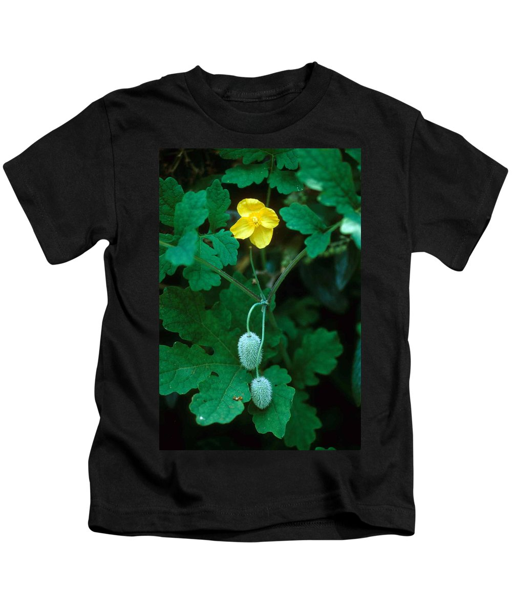 Flower Kids T-Shirt featuring the photograph Flower And Fruit by Laurie Paci