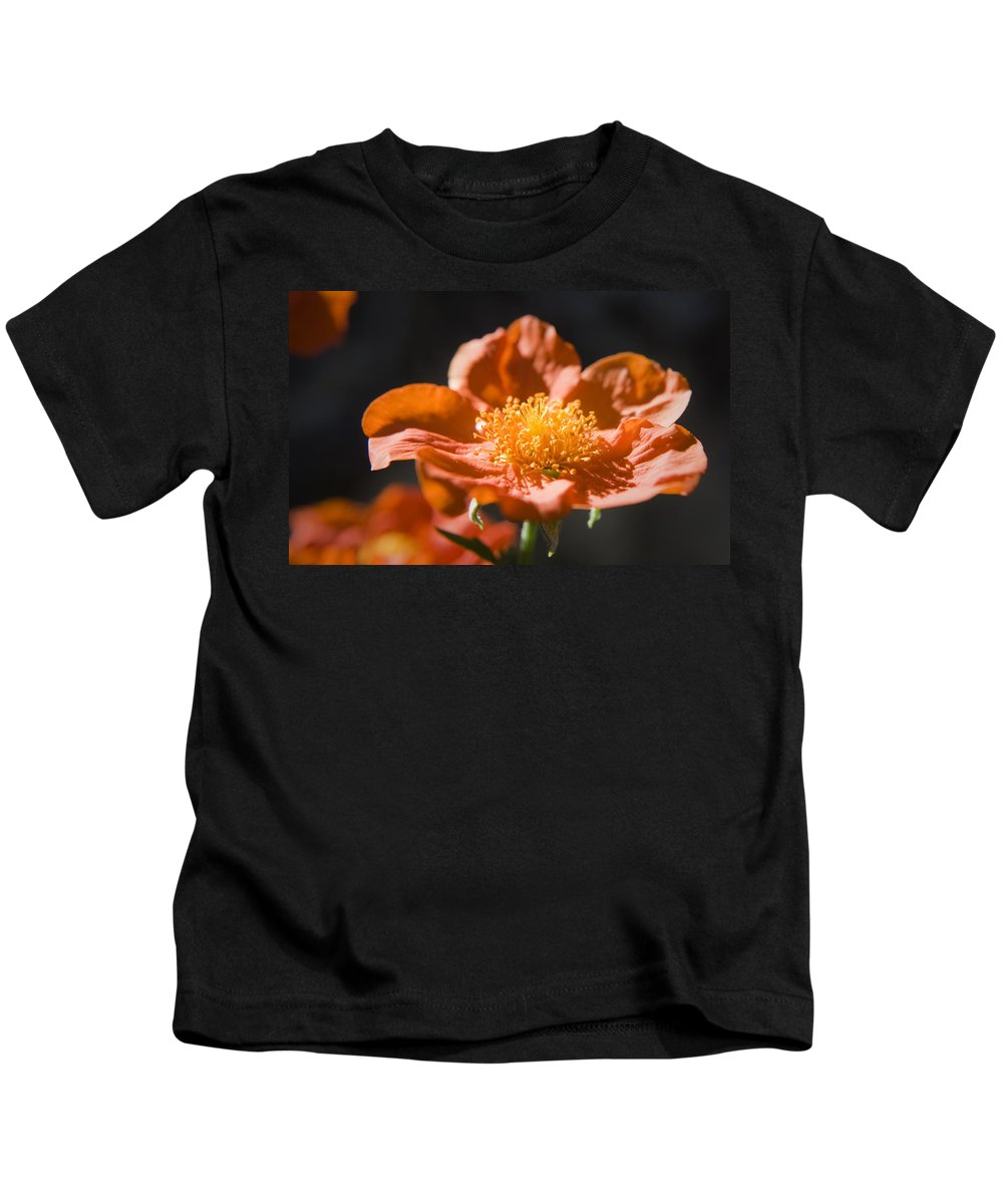 Geum Kids T-Shirt featuring the photograph Geum Scarlet Avens by Teresa Mucha