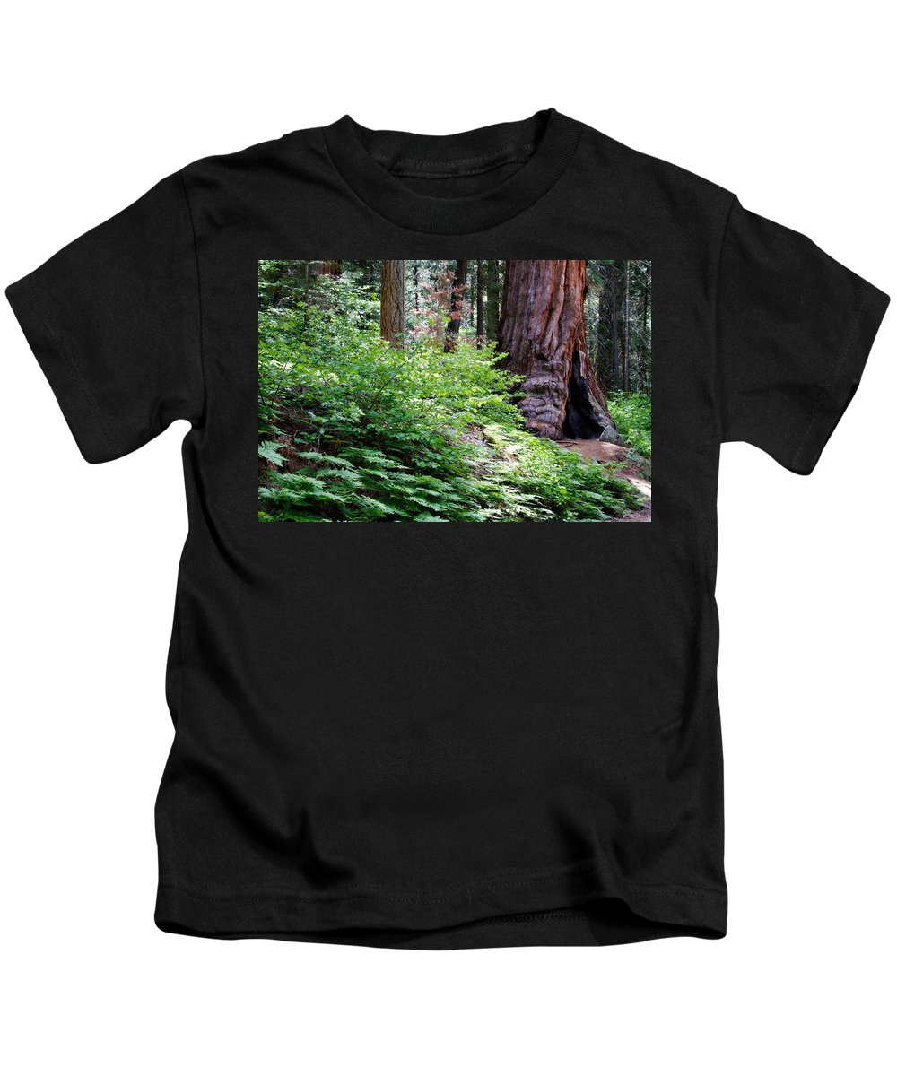 Ca Kids T-Shirt featuring the photograph Giant Among The Forest by Lana Trussell