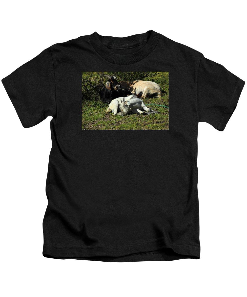 Goat Kids T-Shirt featuring the photograph Goats Lying Under A Bush by Robert Hamm