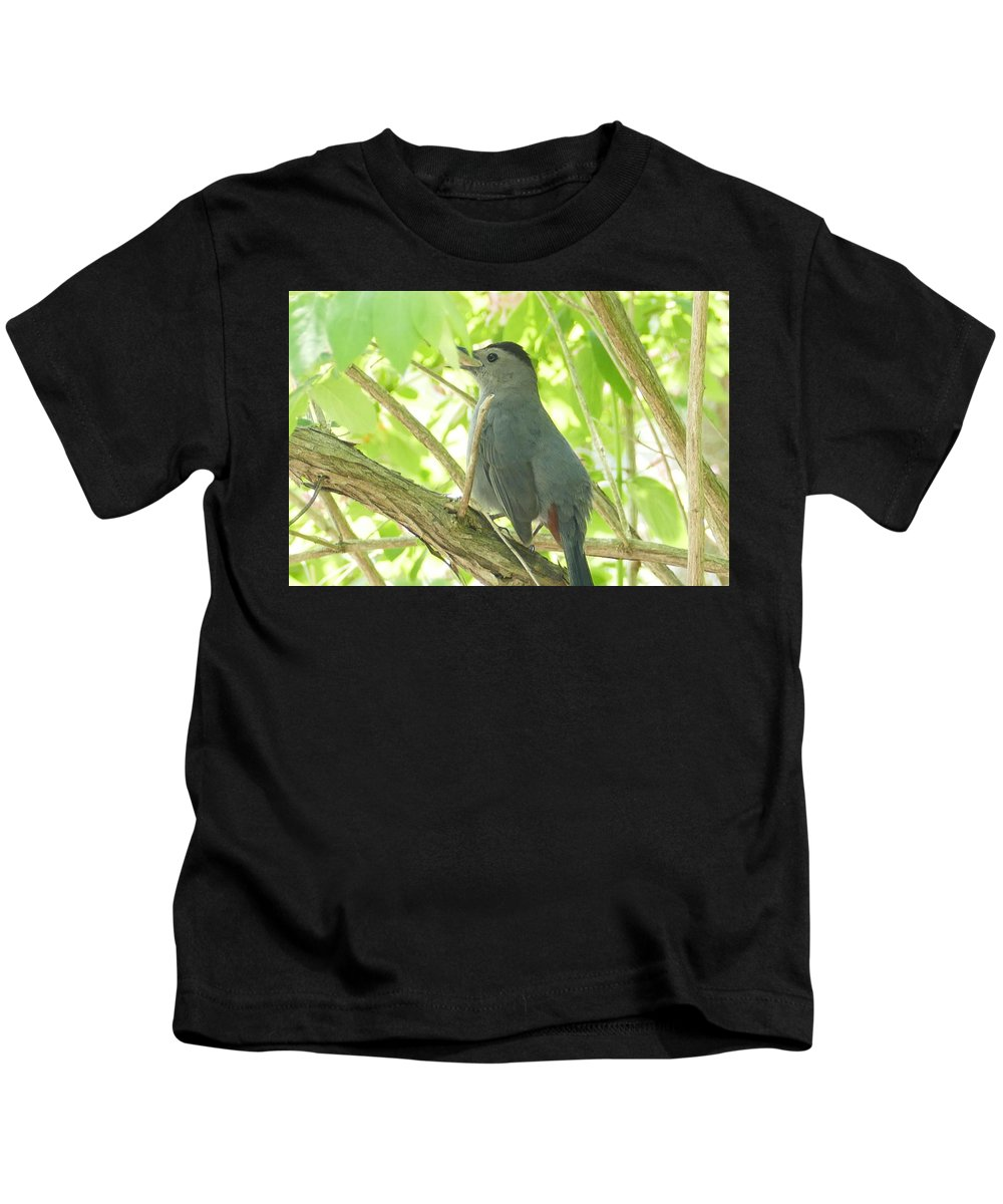 Bird Kids T-Shirt featuring the photograph Gray Catbird by Debbie Storie