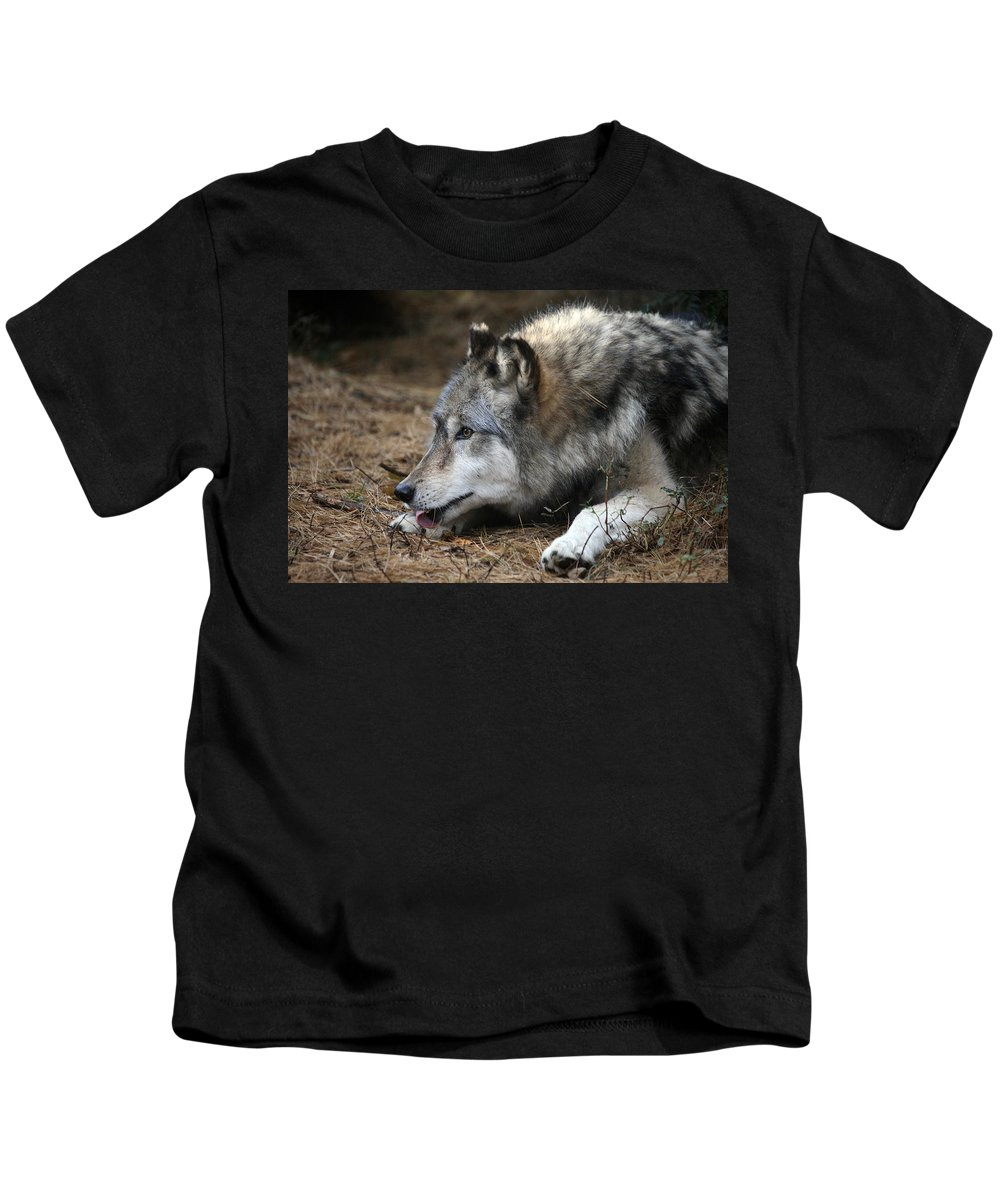 Wolf Kids T-Shirt featuring the photograph Gray Wolf by Karol Livote