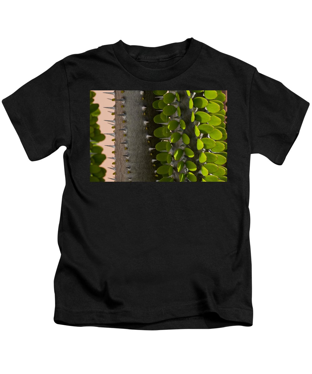 False Ocotillo Kids T-Shirt featuring the photograph Growth Contrast by Kelley King