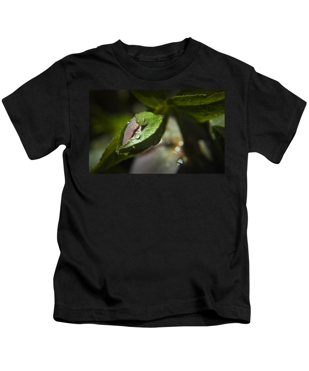 Helleborus Kids T-Shirt featuring the photograph Helleborus Bud by Teresa Mucha