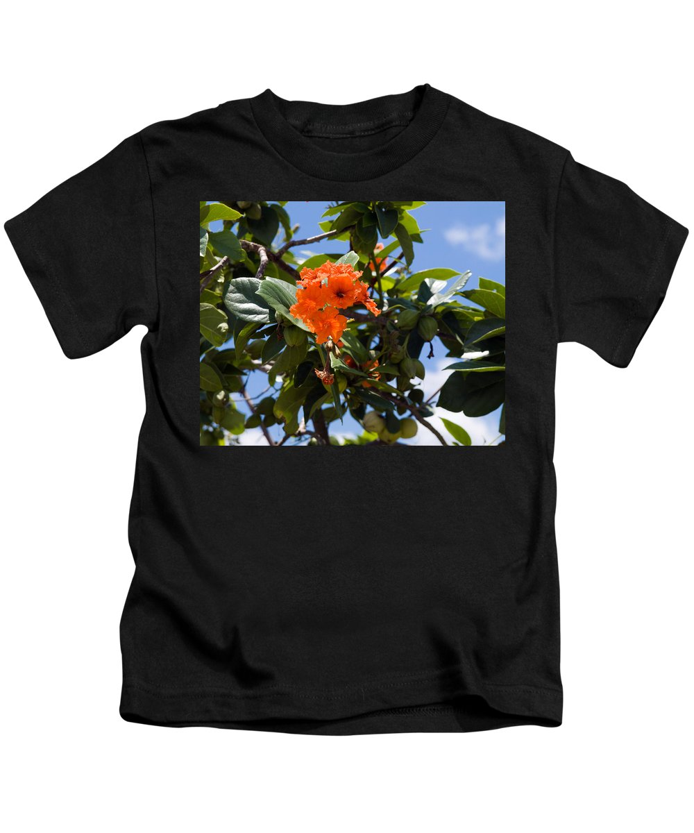 Hibiscus; Rosasinensis; Rosa; Sinensis; Rosa-sinensis; Tree; Bush; Shrub; Plant; Flower; Flowers; Fl Kids T-Shirt featuring the photograph Hibiscus Rosasinensis With Fruit On The Indian River by Allan Hughes