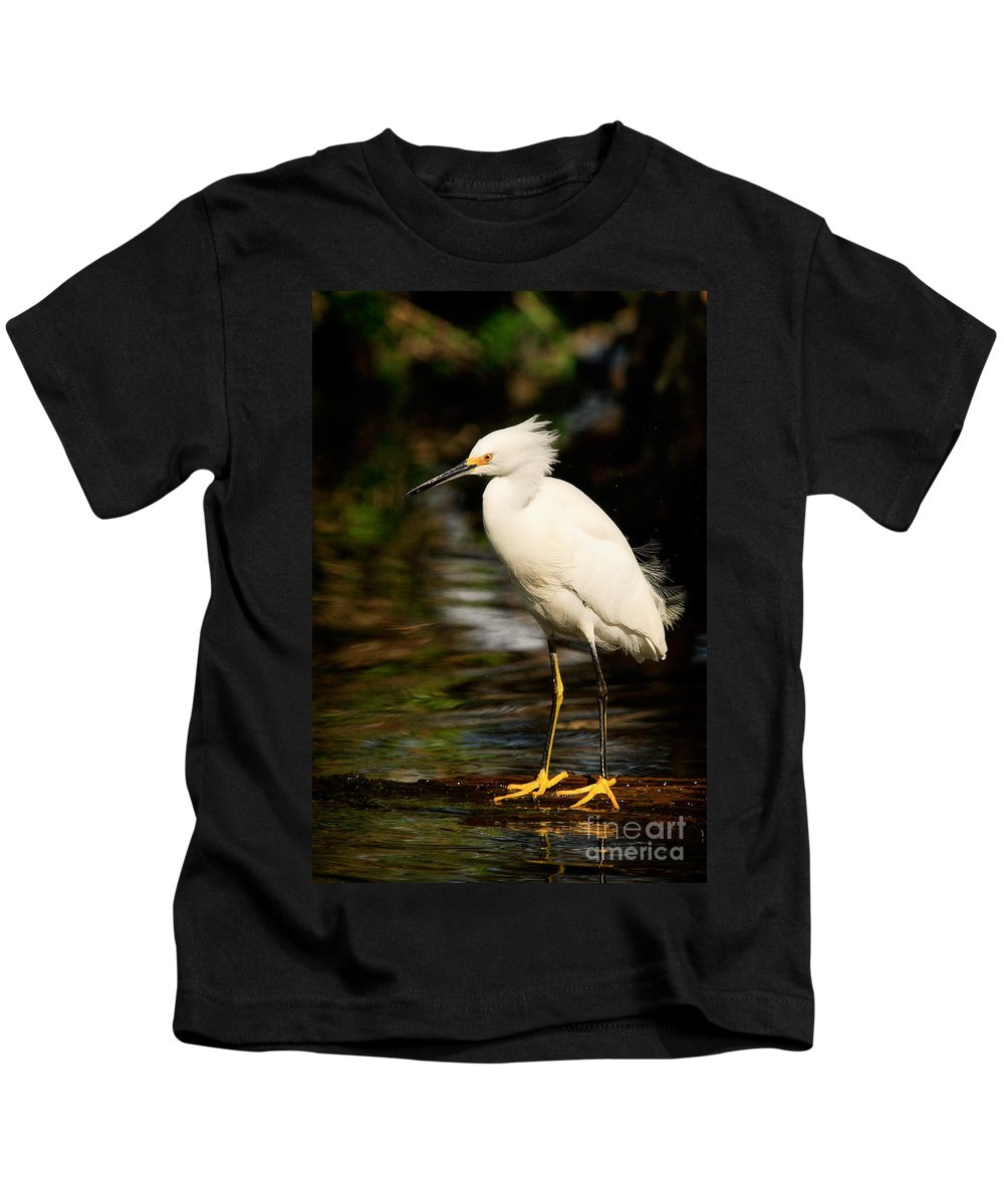 Immature Snowy Egret Kids T-Shirt featuring the photograph Immature Snowy Egret by Matt Suess