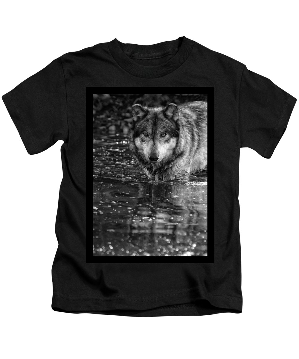 Wolf Wolves Lupine Canis Lupus Wildlife Animal Photography Photograph Kids T-Shirt featuring the photograph Intense Reflection by Shari Jardina