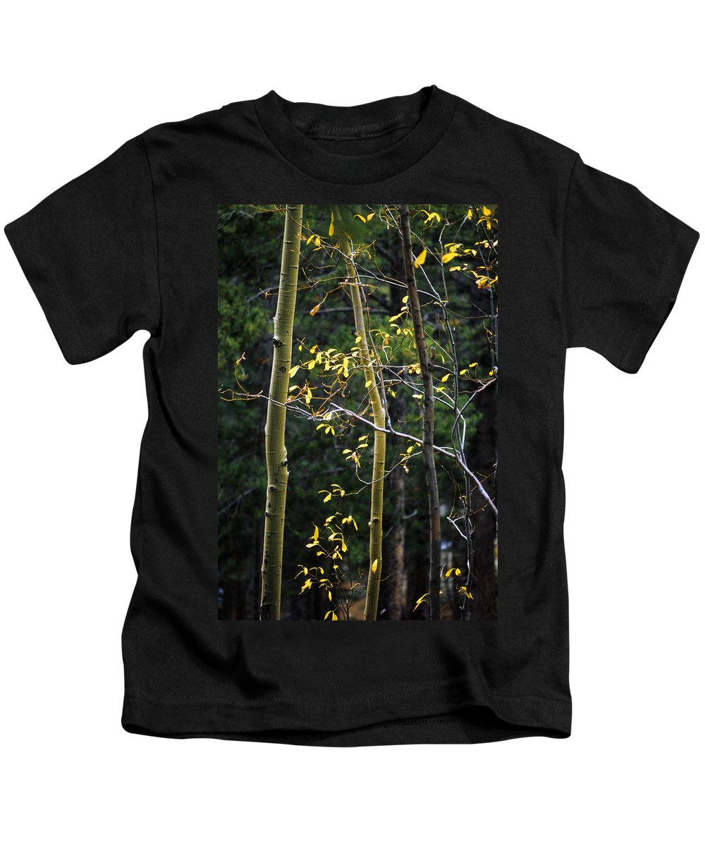 Aspen Kids T-Shirt featuring the photograph Late Aspen by Jerry McElroy