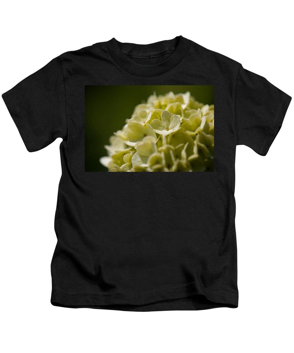 Hydrangea Kids T-Shirt featuring the photograph Lime Hydrangea by Lisa Knechtel