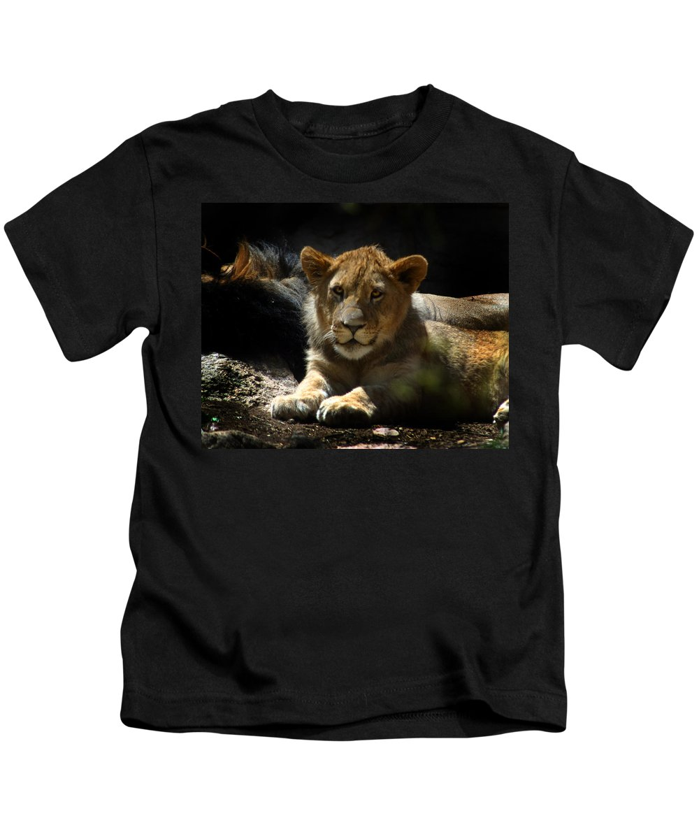 Lions Kids T-Shirt featuring the photograph Lion Cub by Anthony Jones