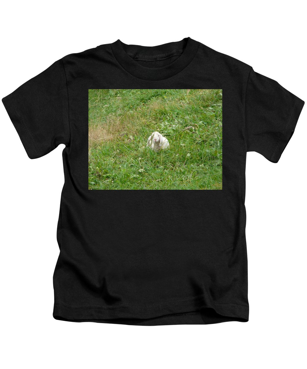 Lamb Kids T-Shirt featuring the photograph Little Lamb by Valerie Ornstein