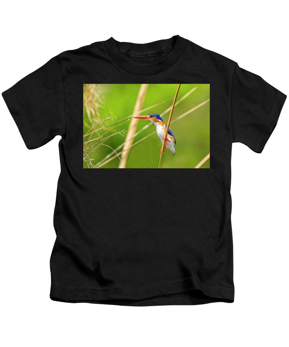 Malachite Kingfisher Kids T-Shirt featuring the photograph Malachite Kingfisher by Kay Brewer
