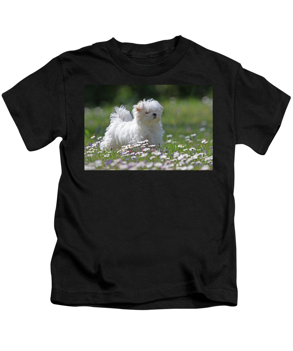 Maltese Kids T-Shirt featuring the photograph Maltese by Jean-Luc Baron