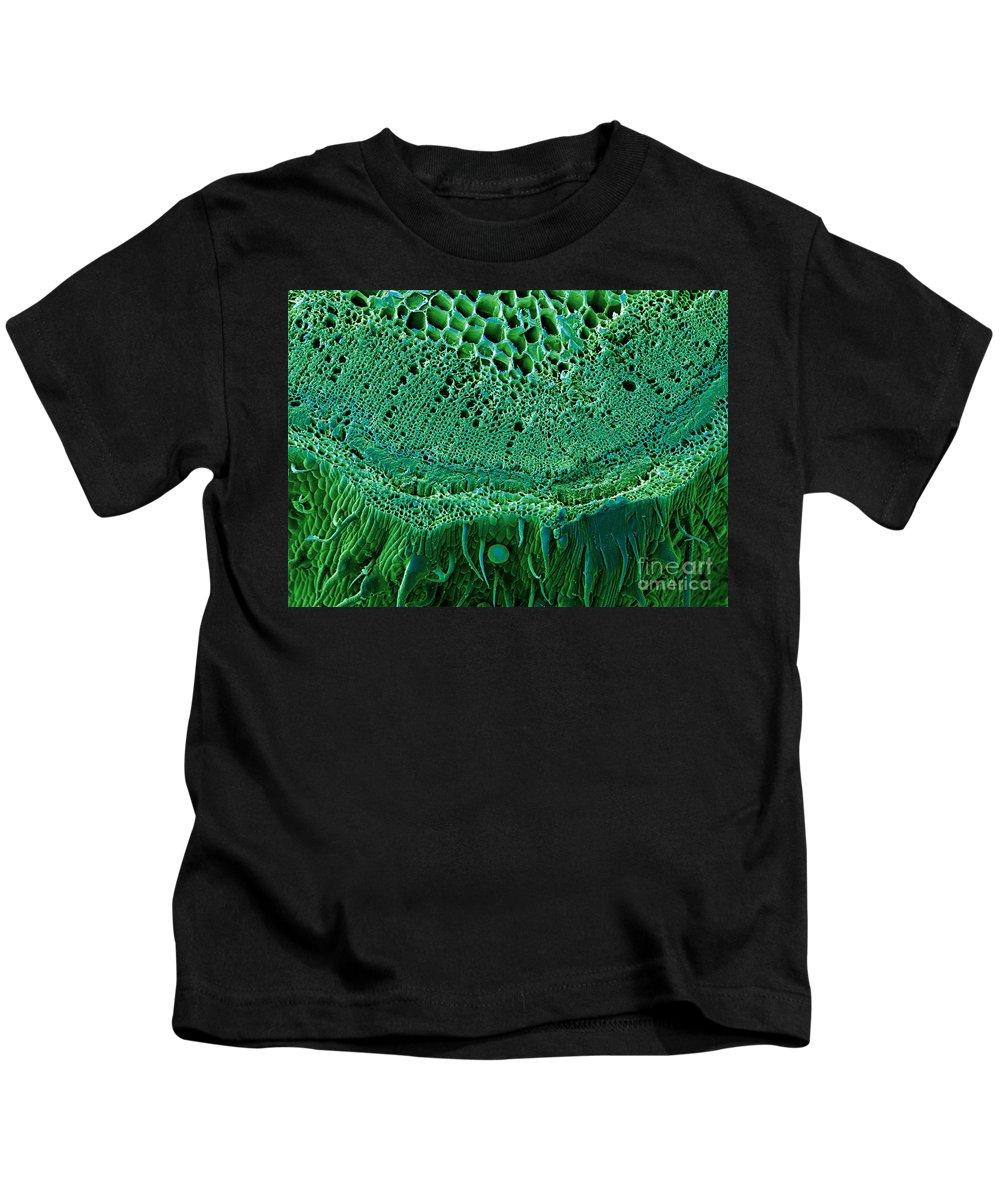 Biological Kids T-Shirt featuring the photograph Marijuana Stem, Cannabis Sativa, Sem by Ted Kinsman