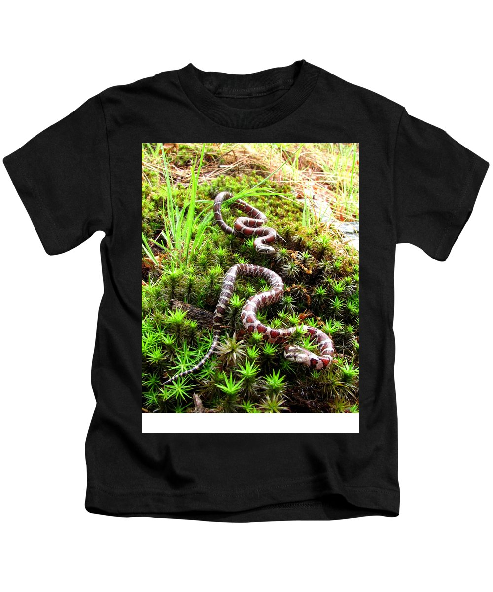 Maryland Milk Snake Photographs Milk Snake Canvas Prints Nonvenomous Reptile Herpetology Appalachian Mountain Forest Ecology Biodiversity Nature Fauna Wildlife Serpent Kids T-Shirt featuring the photograph Maryland Milk Snakes Verticle by Joshua Bales