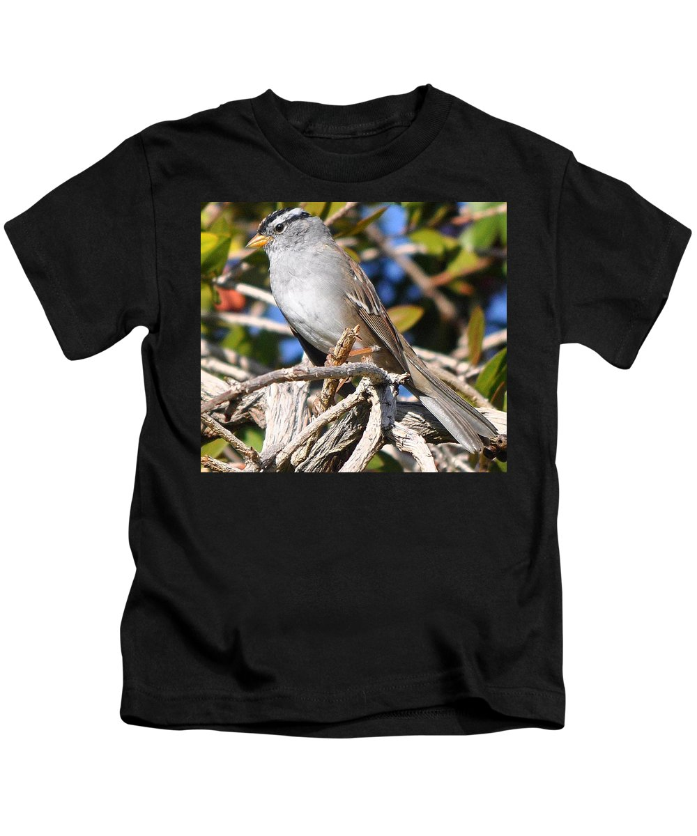 Animal Kids T-Shirt featuring the photograph Mockingbird Finally Being Quite by Jay Milo