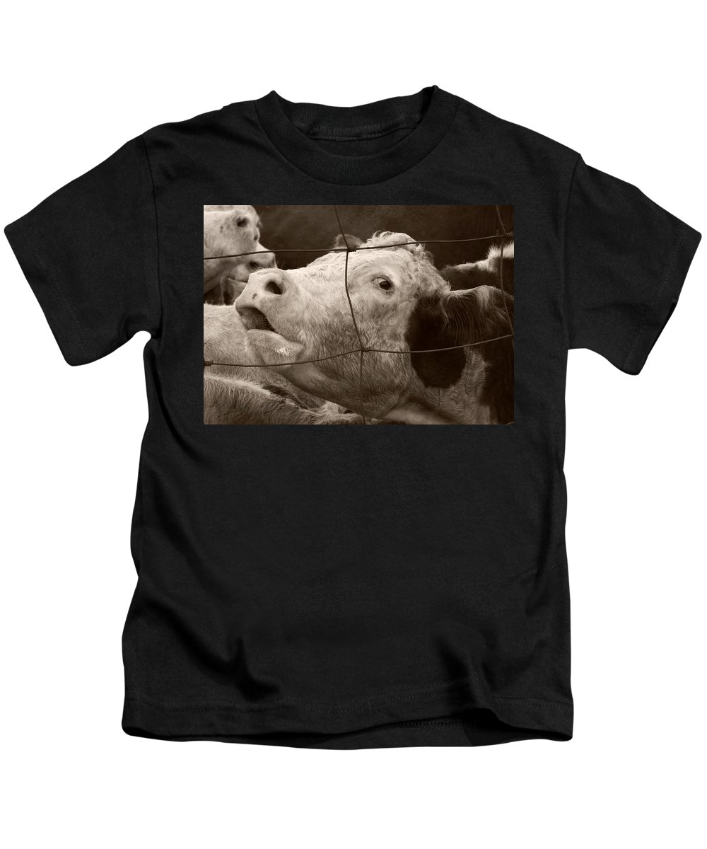 Cow Kids T-Shirt featuring the photograph Moooo by Marilyn Hunt