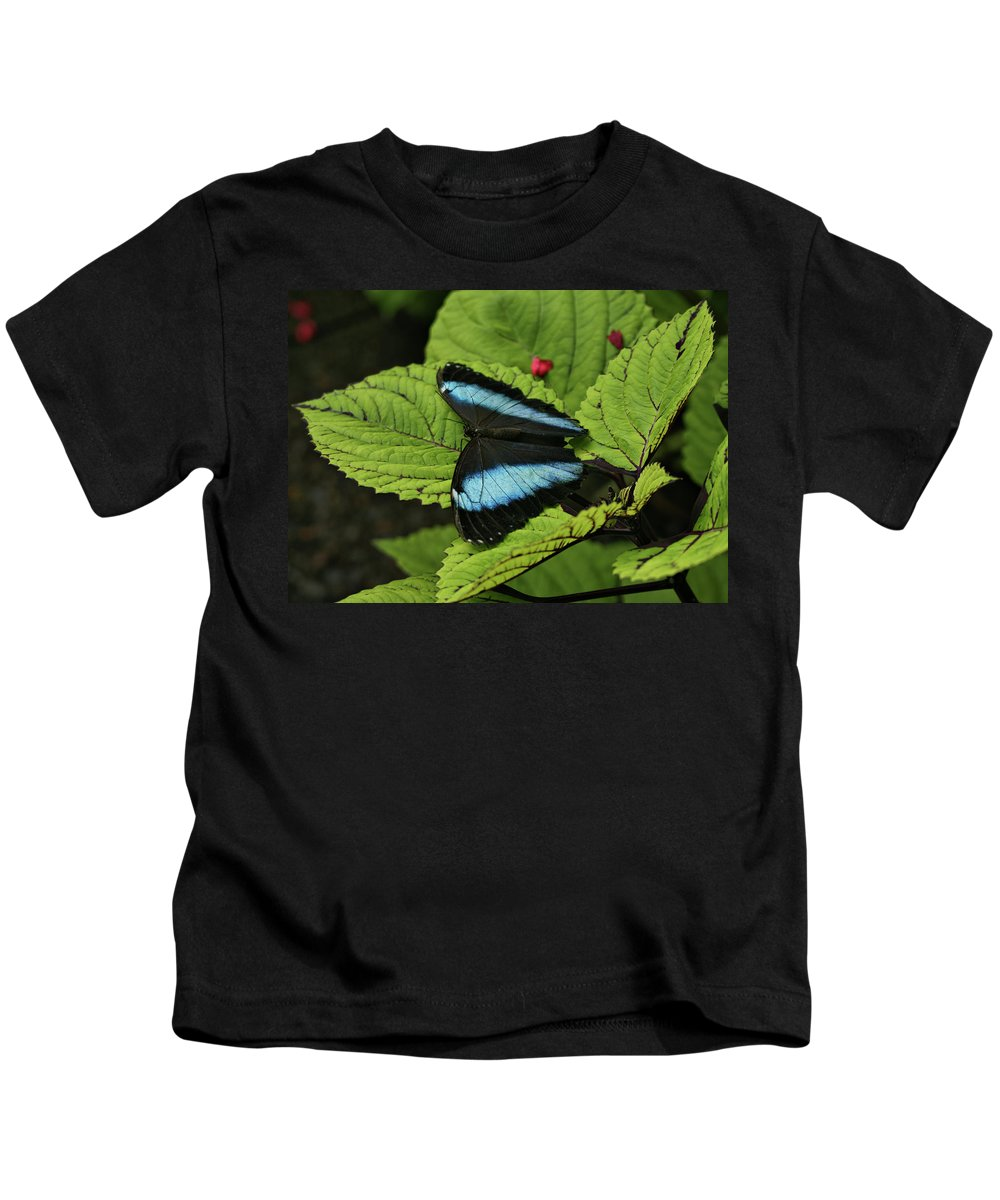 Butterfly Kids T-Shirt featuring the photograph Morpho Butterfly by Sandy Keeton