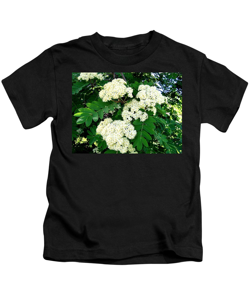 Mountain Ash Kids T-Shirt featuring the photograph Mountain Ash Blossoms by Will Borden