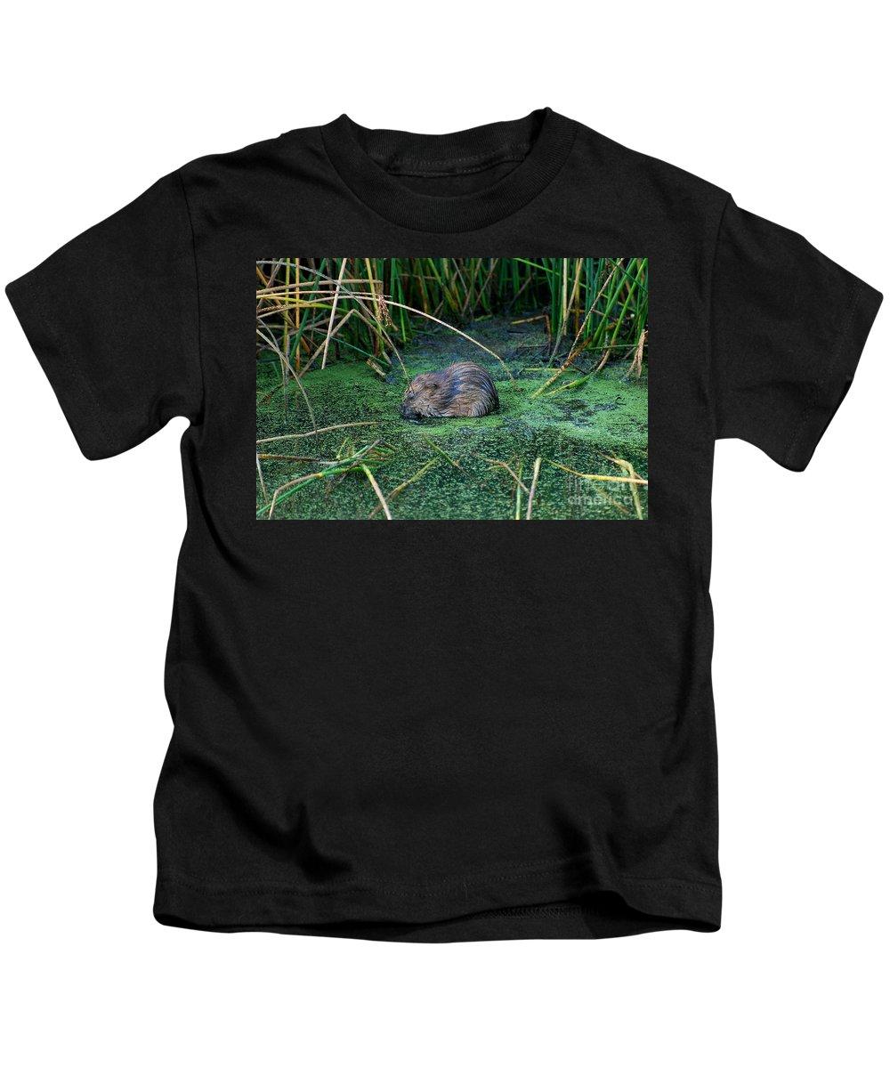 Muscrat Kids T-Shirt featuring the photograph Mr. Muscrat by Todd Hostetter