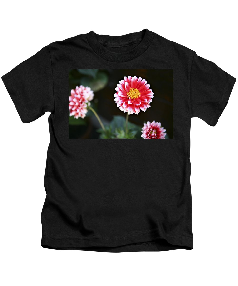 Three Kids T-Shirt featuring the photograph Mums by Marilyn Hunt