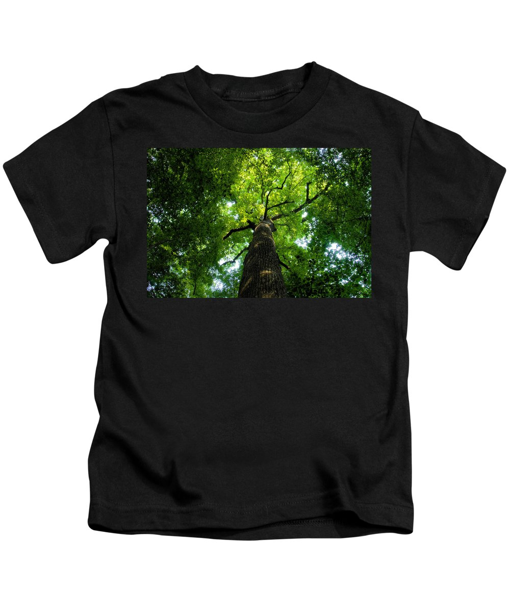 Old Growth Forest Kids T-Shirt featuring the painting Old Growth by David Lee Thompson