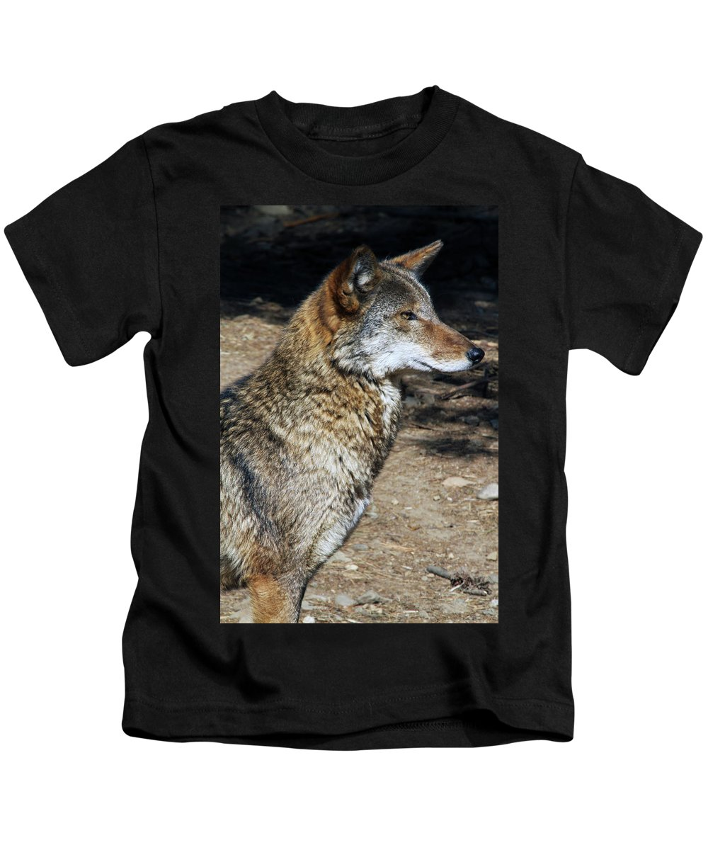 Wolf Kids T-Shirt featuring the photograph On Alert by Karol Livote