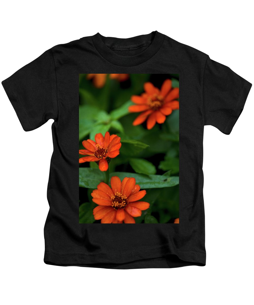 Daisey's Kids T-Shirt featuring the photograph Orange Daisey's by Paul Mangold