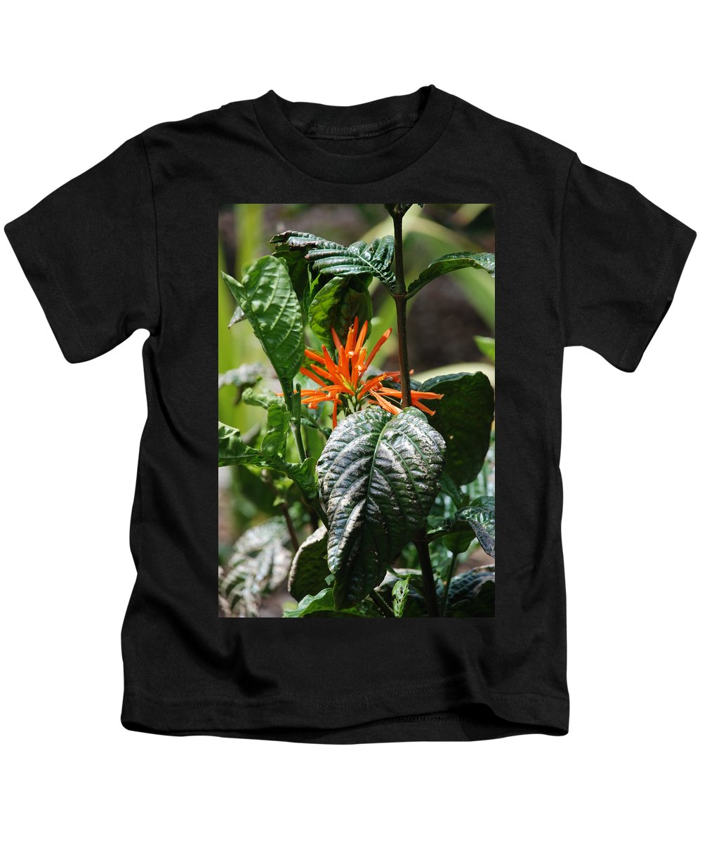 Banana Leaf Kids T-Shirt featuring the photograph Orange Plants by Rob Hans