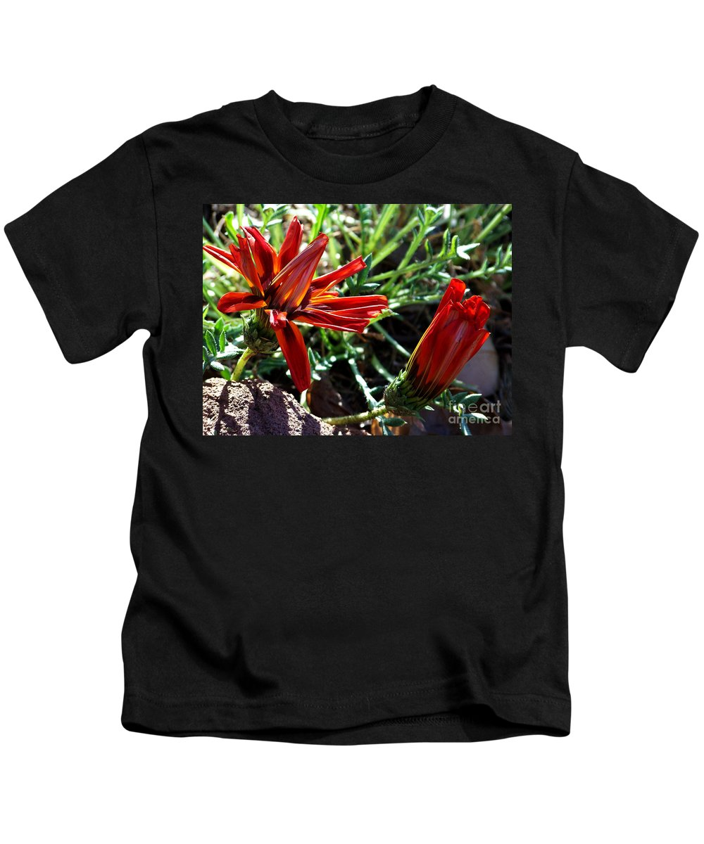 Gazania Kids T-Shirt featuring the photograph Orange Power by Kathy McClure