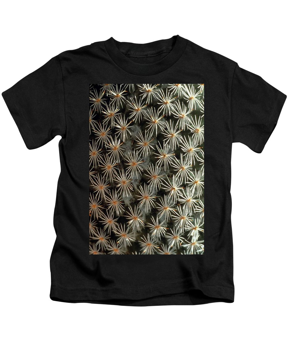 Cactus Kids T-Shirt featuring the photograph Patterns In Light And Dark by Laurie Paci