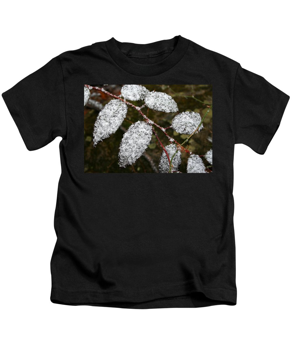 Winter Season Cold Snow Tree Branch Leaf Leaves White Green Frosted Powder Kids T-Shirt featuring the photograph Powdered by Andrei Shliakhau