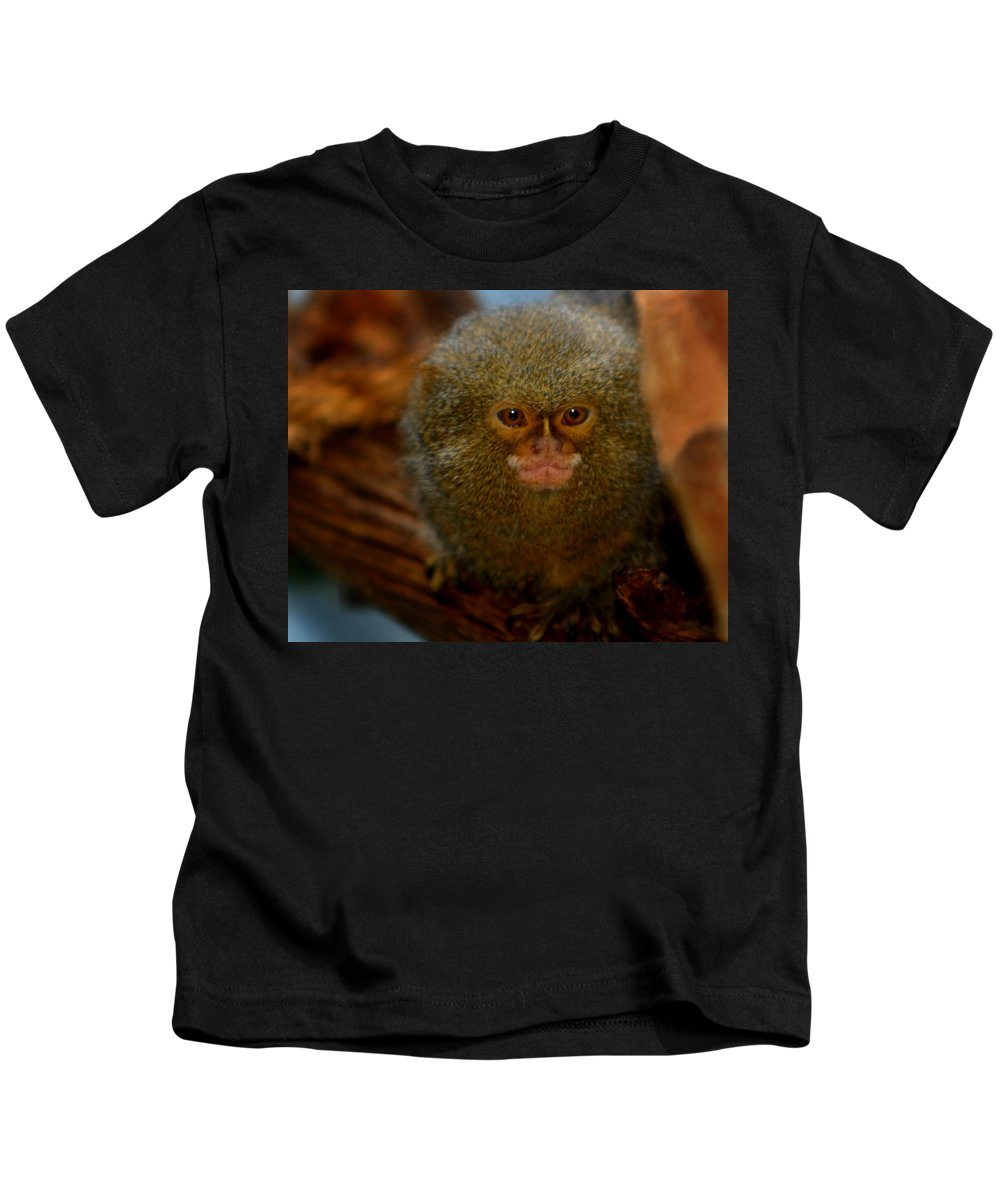 Pygmy Marmoset Kids T-Shirt featuring the photograph Pygmy Marmoset by Anthony Jones