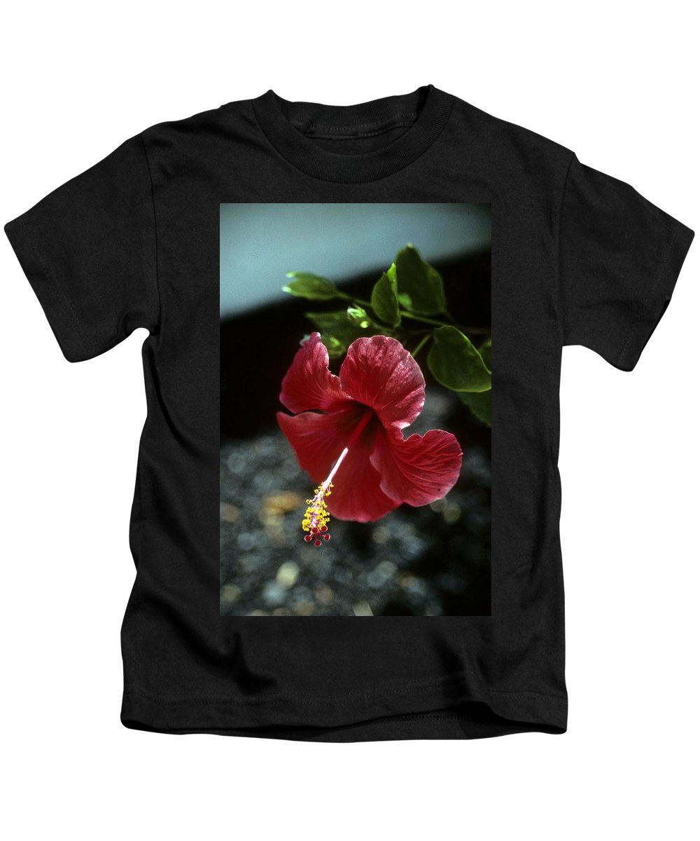 Orchid Kids T-Shirt featuring the photograph Ready For Picking by Gary Wonning