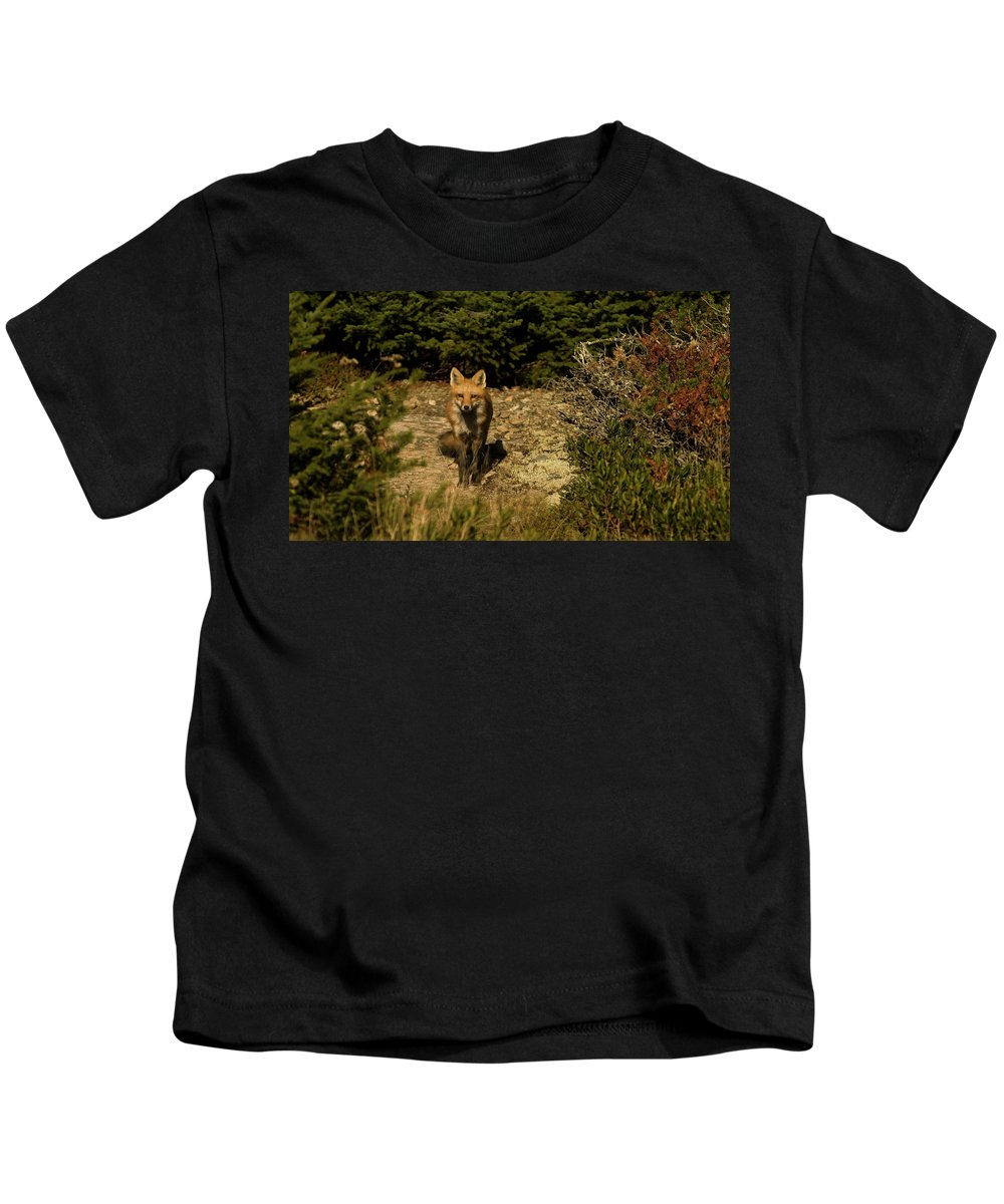 red Fox Kids T-Shirt featuring the photograph Red Fox by Paul Mangold