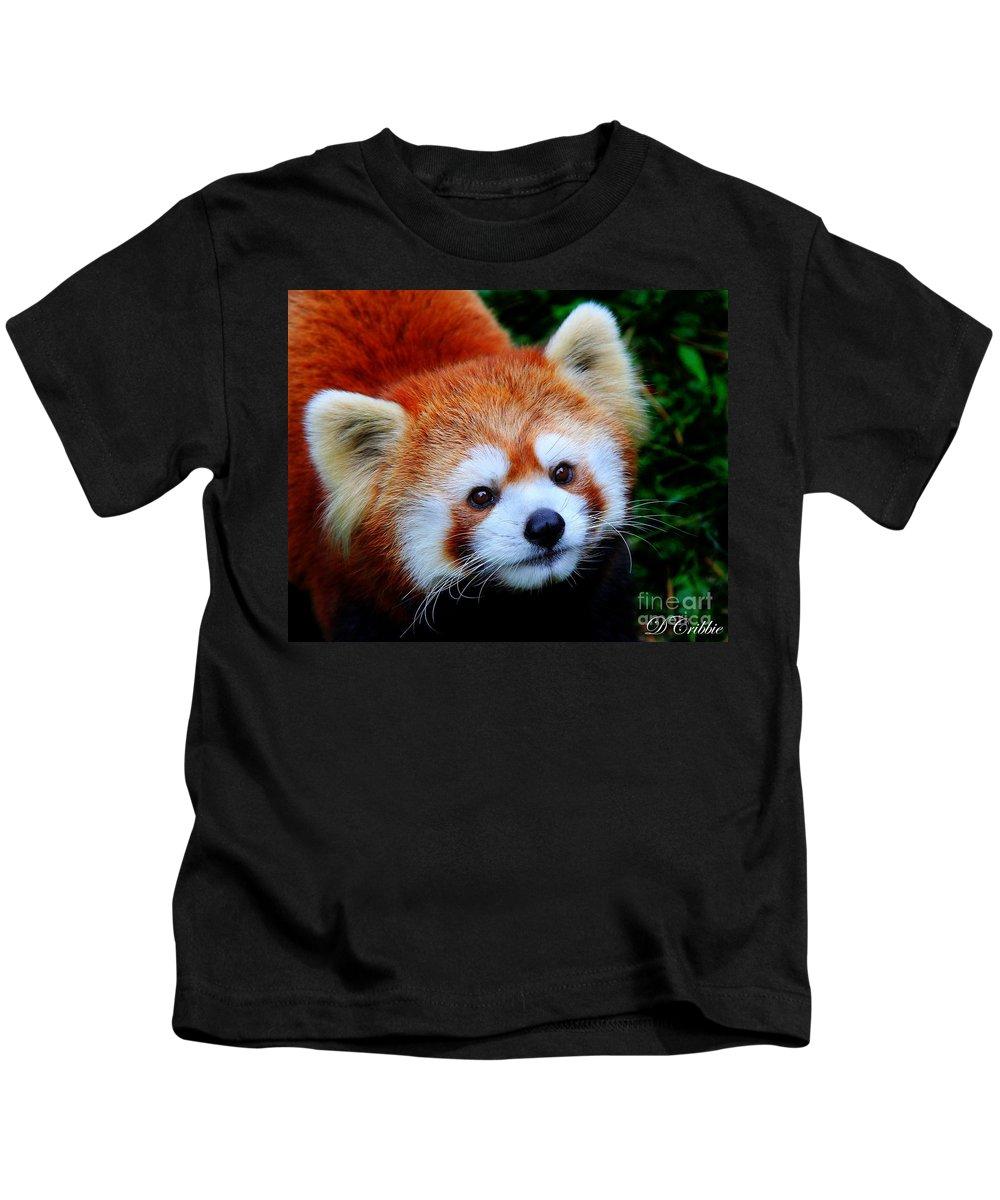 Panda Kids T-Shirt featuring the photograph Red Panda by Davandra Cribbie