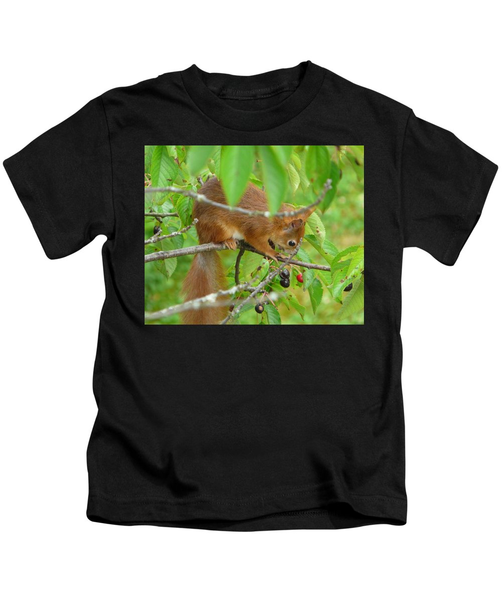 Animal Kids T-Shirt featuring the photograph Red Squirrel In The Cherry Tree by Valerie Ornstein