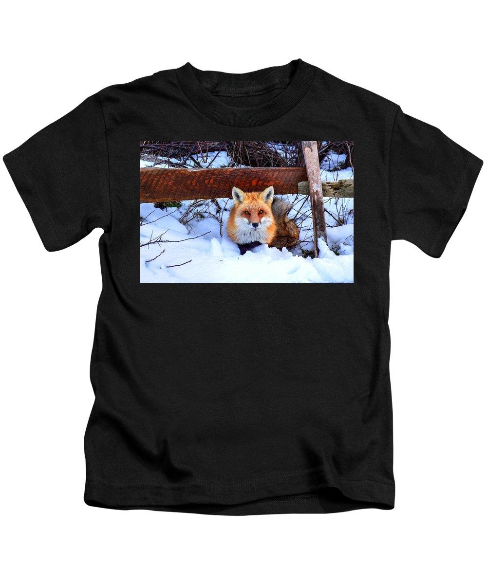 Fox Kids T-Shirt featuring the photograph Resting Fox by Bob Cuthbert