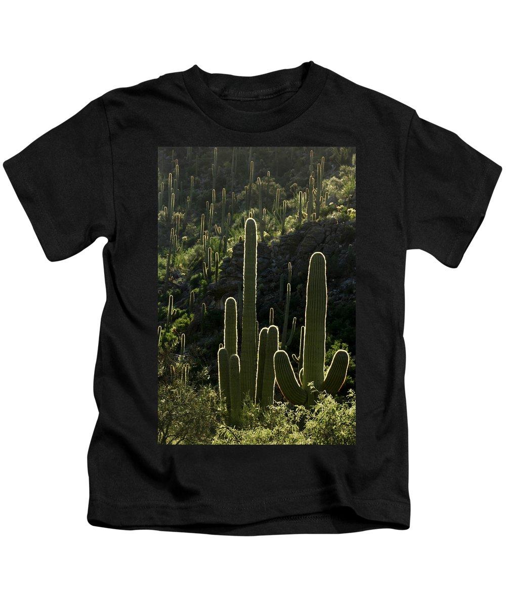 Saguaro Kids T-Shirt featuring the photograph Saguaro Cactus Backlit by Jill Reger