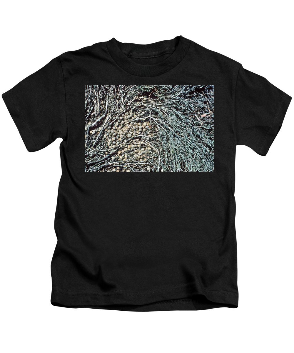 Seeds Kids T-Shirt featuring the photograph Seeds Of The Sea by Laurie Paci