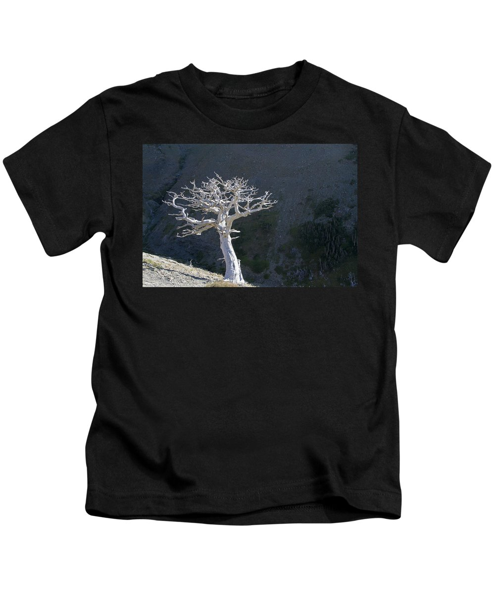 Glacier Kids T-Shirt featuring the photograph Silver Tree Glacier Park Montana by Waterdancer